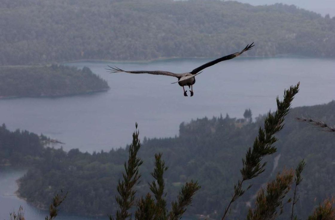 Andes Bird